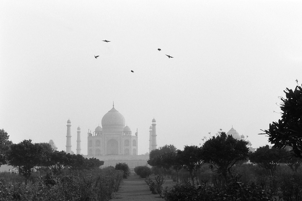 Harbel Photography, The Birds - 5 birds. Five Birds at the Taj. Vera Fotografia