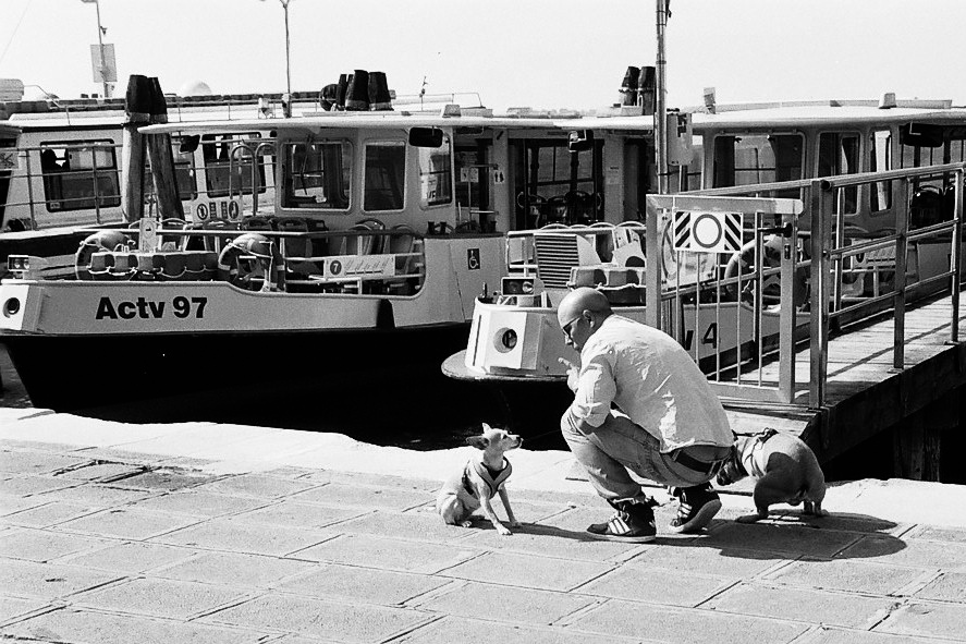 Harbel Photography, The Dogs - Bad Dog. Bad Dog. Vera Fotografia