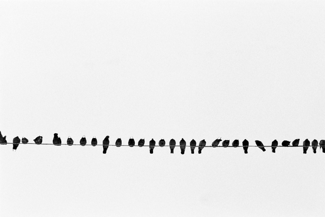 Harbel Photography, The Birds - Birds on a string. Birds on a wire. Vera Fotografia