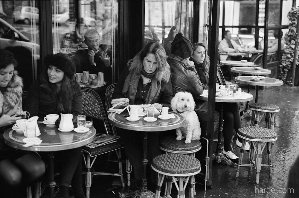 Harbel Photography, The Dogs - Cafe de Flore. A dog at a cafe watches me carefully, while the humans are busy. Vera Fotografia