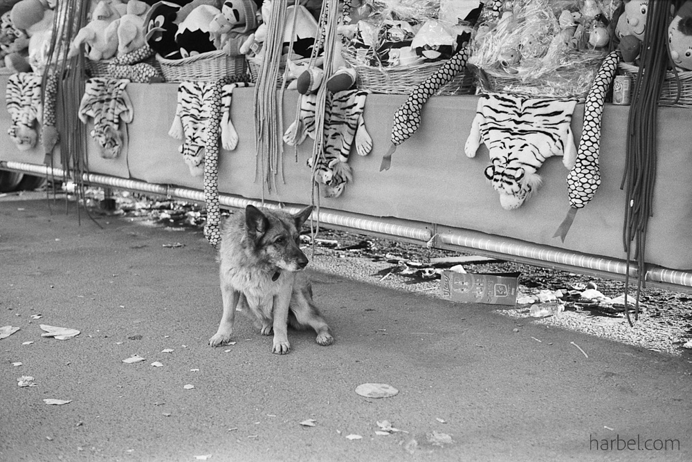 Harbel Photography, The Dogs - Dog guarding the pelts. A fairground dog. Vera Fotografia