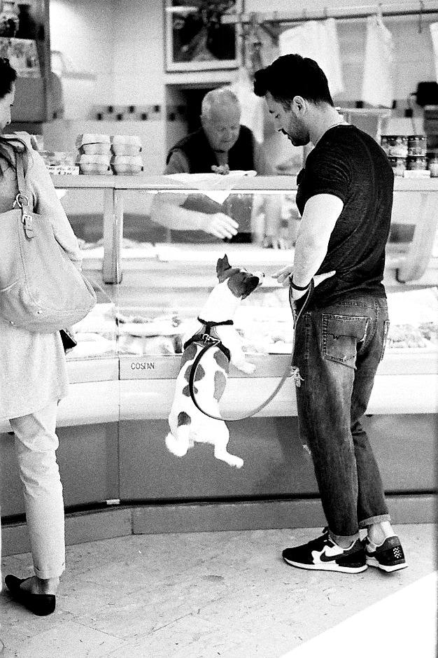 Harbel Photography, The Dogs - For me 3. Butcher shop Jack Russel 3. Vera Fotografia