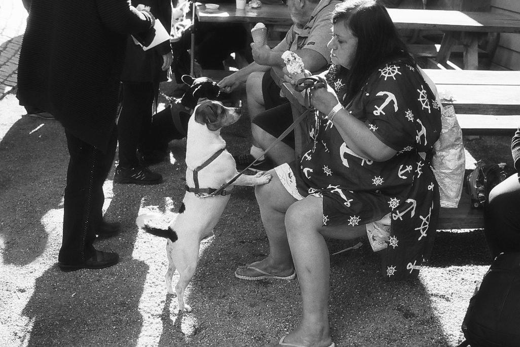 Harbel Photography, The Dogs - Icecream Dogs. Ice Cream Dogs. Vera Fotografia