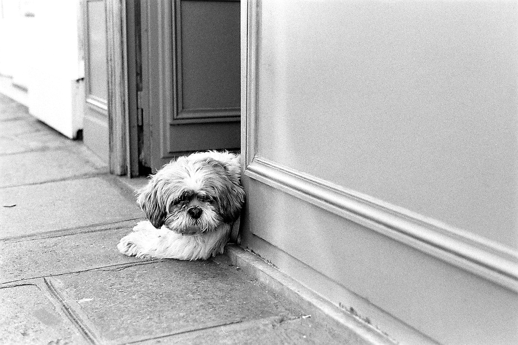 Harbel Photography, The Dogs - Little Shop Dog. The little shop dog. Vera Fotografia