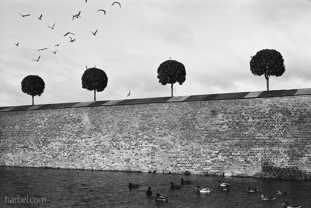 Harbel Photography, The Birds - Moat and four trees. Moat and four trees. Vera Fotografia