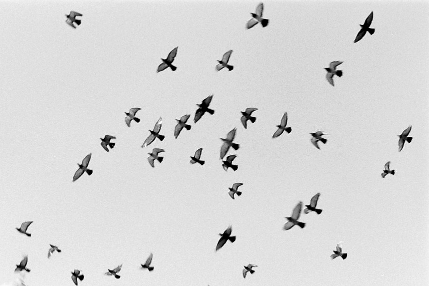 Harbel Photography, The Birds - Overhead. Birds Overhead. Vera Fotografia