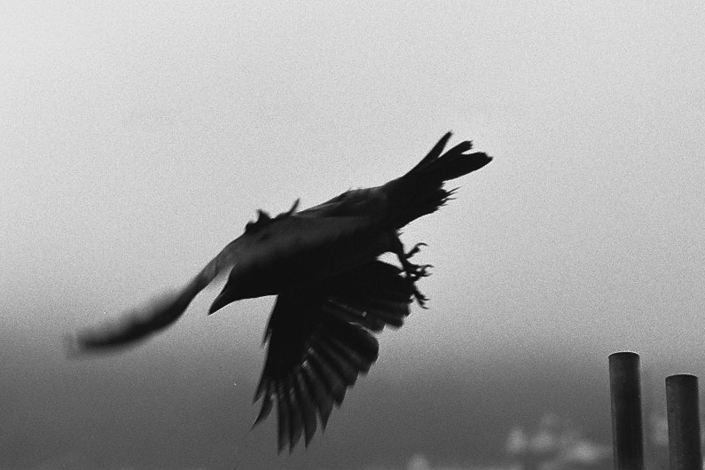 Harbel Photography, The Birds - Taking flight. Taking flight. Vera Fotografia