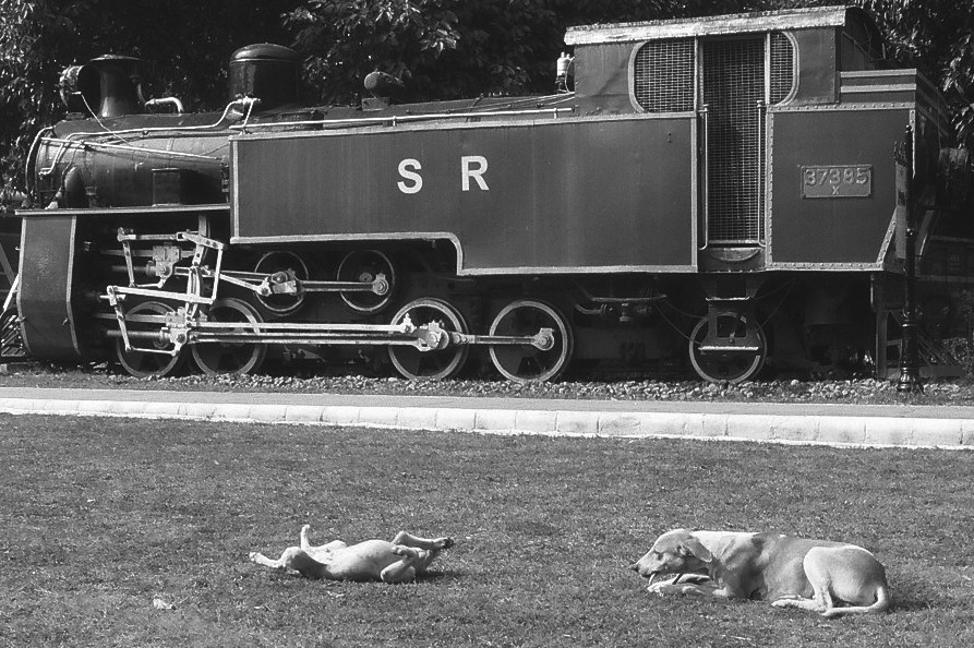 Harbel Photography, The Dogs - Train and two dogs. Train and Two Dogs. Vera Fotografia