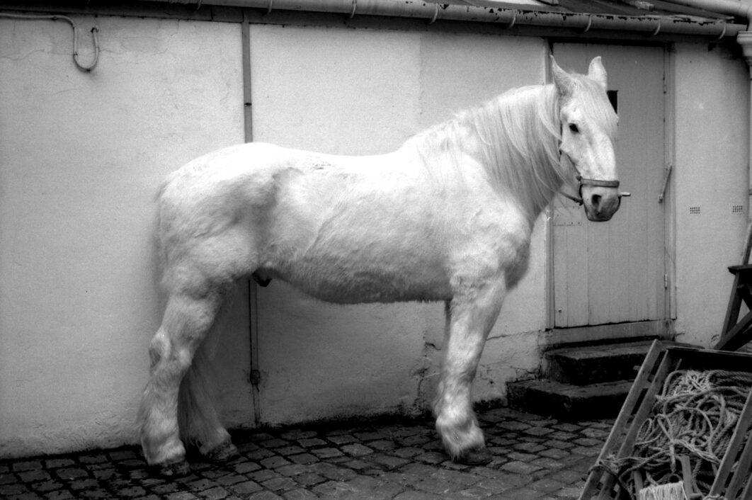 Harbel Photography, The Others - White Horse. White Horse. Vera Fotografia