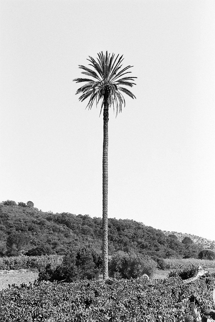 Harbel Photography, The Calm - straight palm. The palm tree. Vera Fotografia