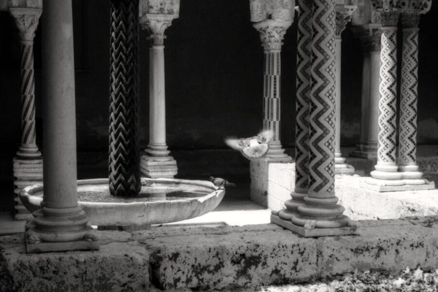 Harbel Photography, The Birds - the cloister. The cloister. Vera Fotografia